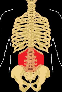csontritkulás ágyéki kenőcs kezelése)