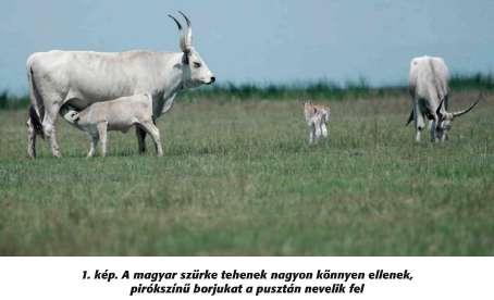 közös állatállomány-kezelés)
