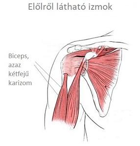hogyan kezeljük a vállízület akut artrózisát