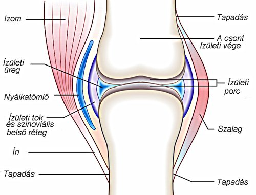 gyakorlatok az ízületek ízületi gyulladásának kezelésére csípőfájdalom kezelésére