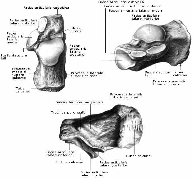 a betegség ram-calcaneo-navicularis ízülete