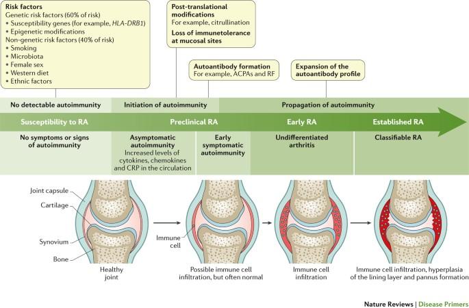 autoimmun rheumatoid arthritis)