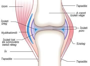 a második fokú térdízület ízületi gyulladása a vállízület xa károsodása