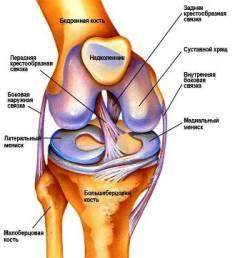 térdízület mellékkötegeinek artroszkópos helyreállítása