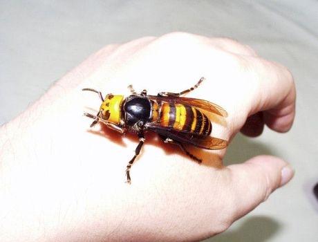 méhcsípés artrózis kezelése