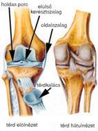 artrózis és térdízületi kezelés)