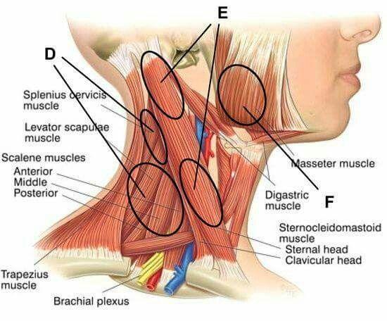 clavicularis arthrosis kezelés időszakosan duzzadt térdízület