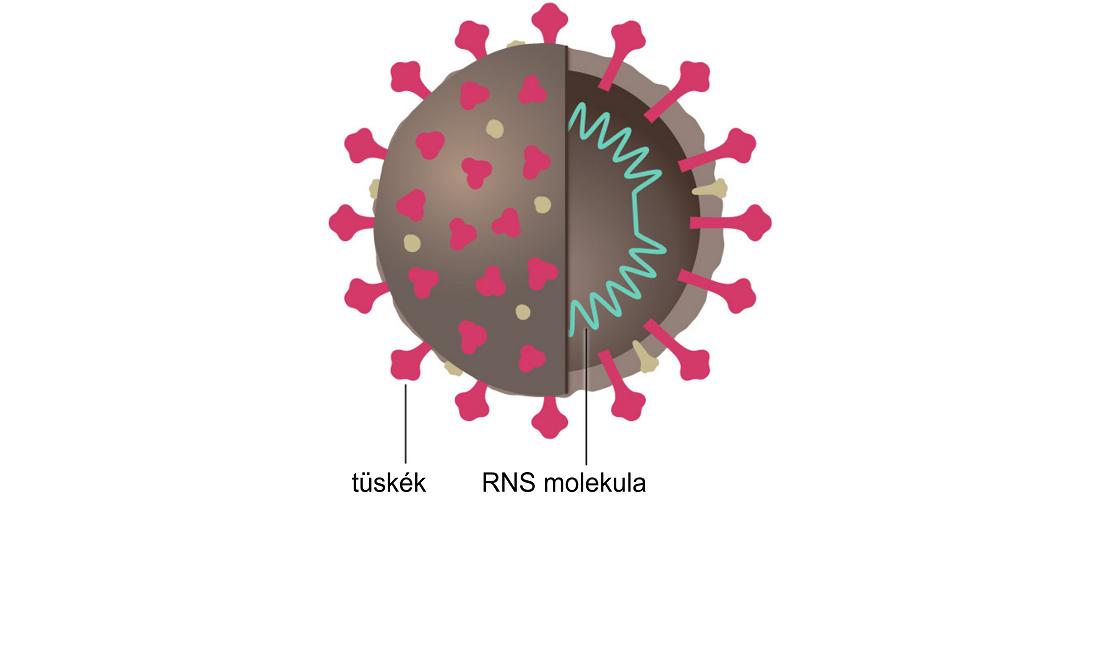 izomízületi vírusos fertőzés