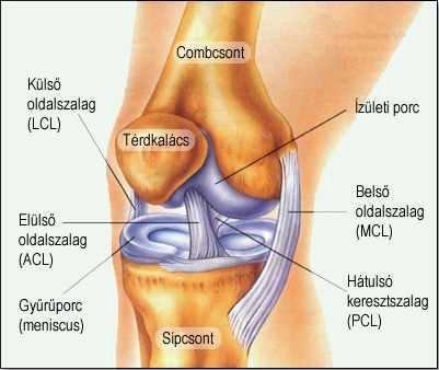 mi a csontok és ízületek betegsége fájdalom a könyökízületben kívülről