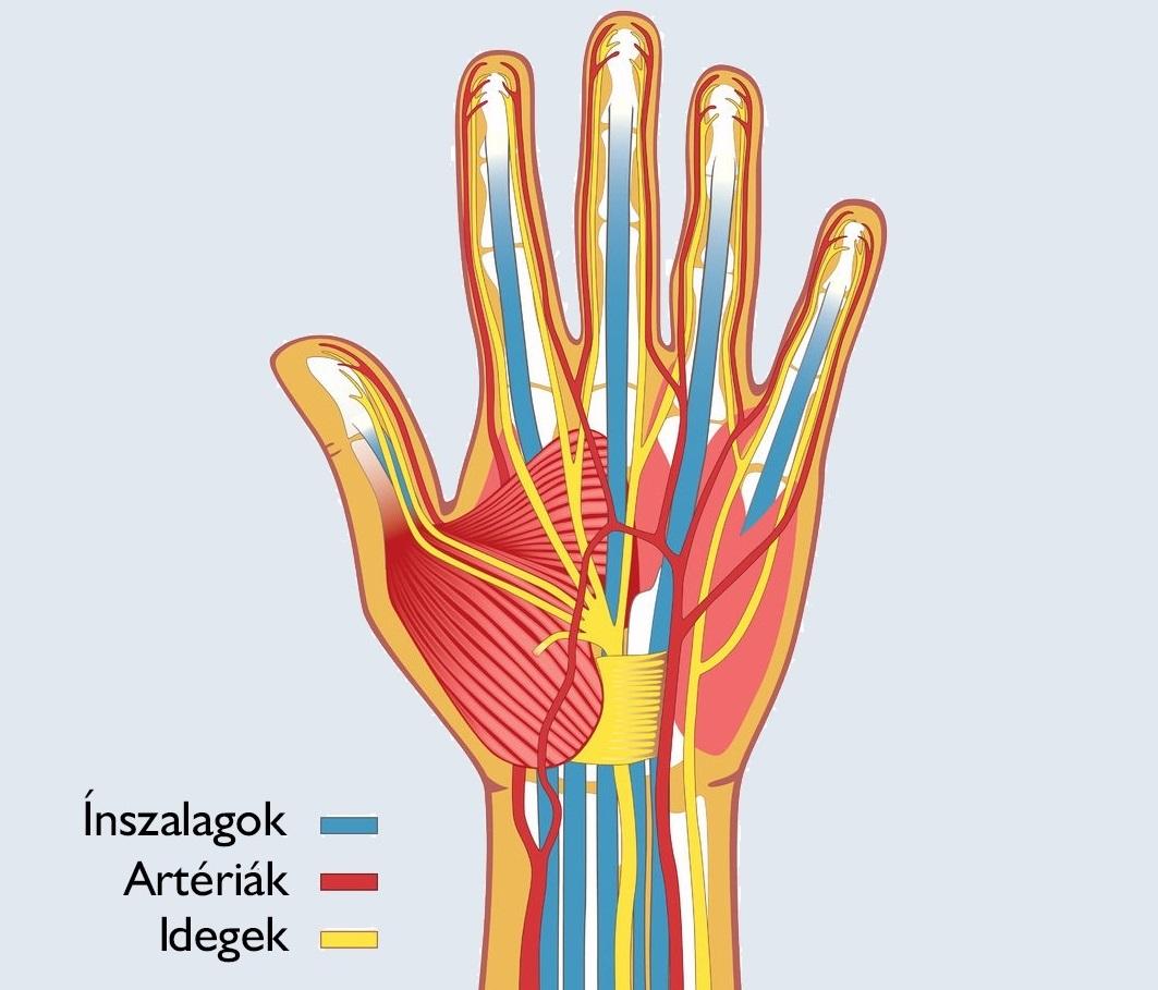 a kéz könyökízületi elmozdulása)