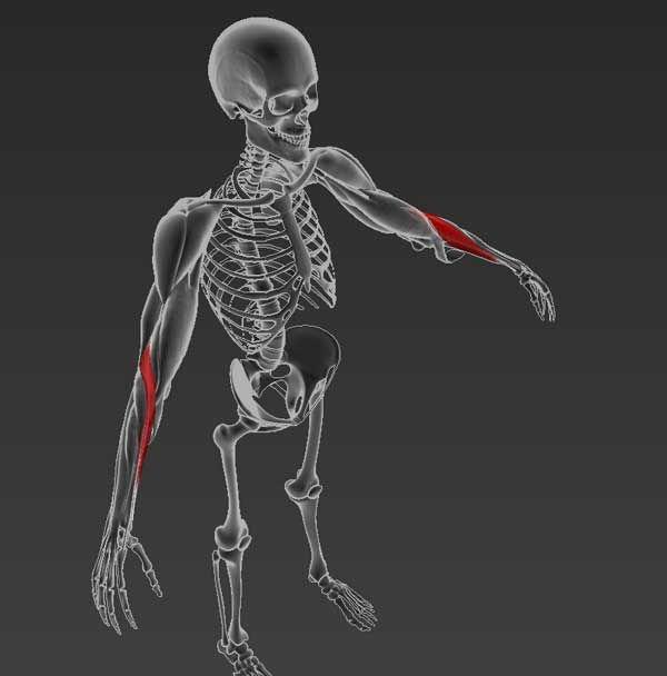 az interfalangeális ízületek artrózisának mértéke)