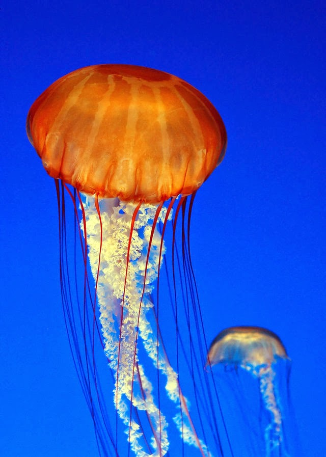 közös kezelés medúzával)