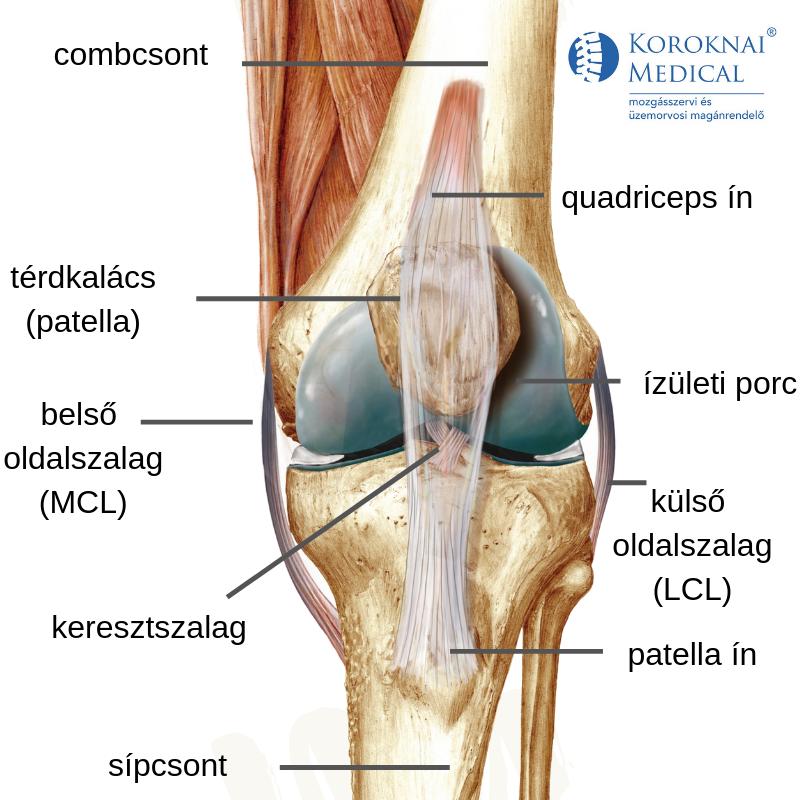 térdízület patella fájdalom)