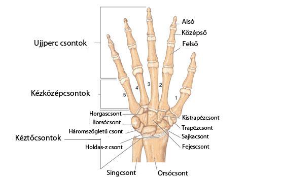 fájdalom a jobb kéz középső ujjának ízületeiben az ízületek ízületi gyulladásának hatékony kezelése