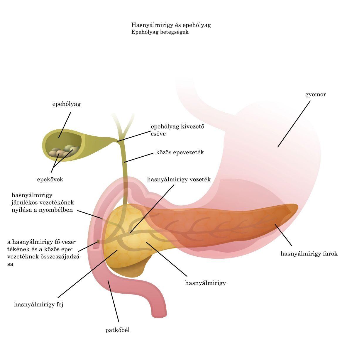 gyógyszerek a vérkeringés javítására oszteokondrozisban)