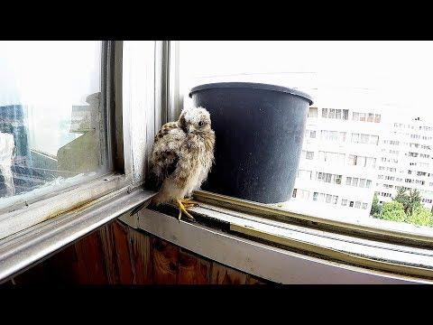 a madarak lábainak ízületei sérülései)