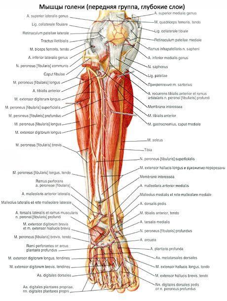 fájdalom a láb bokaízületeiben