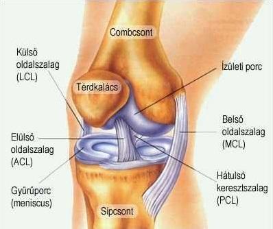 a combcsont-patellarízület ízületi gyulladása