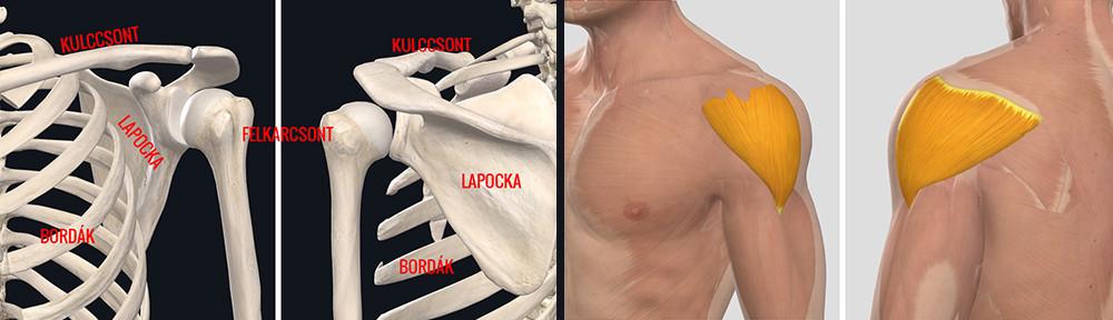 midocal a vállízület artrózisában)