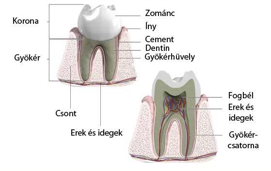 fájdalomcsillapító fogfájás)