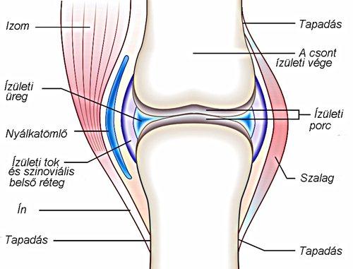 csont- és ízületi fájdalomcsillapítás méhnyakcsonti osteochondrosis fájdalom a könyök ízületek