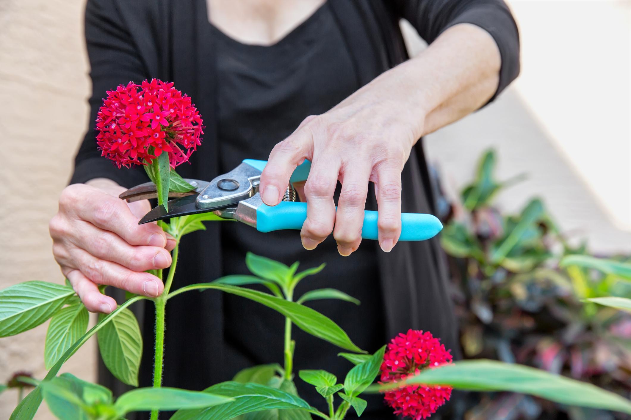 fájdalom és ropogás a kéz kis ízületeiben új artróziskezelés
