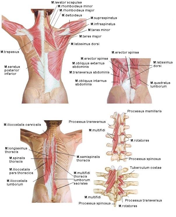fájdalom a csigolyában és a csípőben)