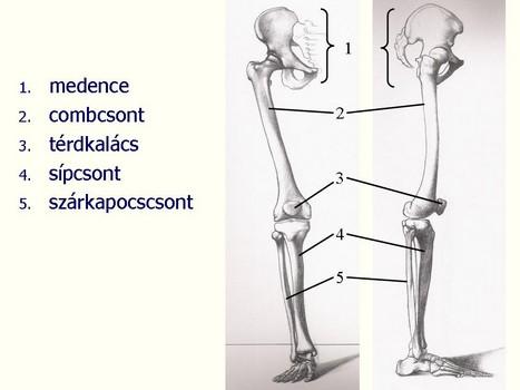 izomfájdalom anémiás ízületekben kenőcs csontritkulás kezelése