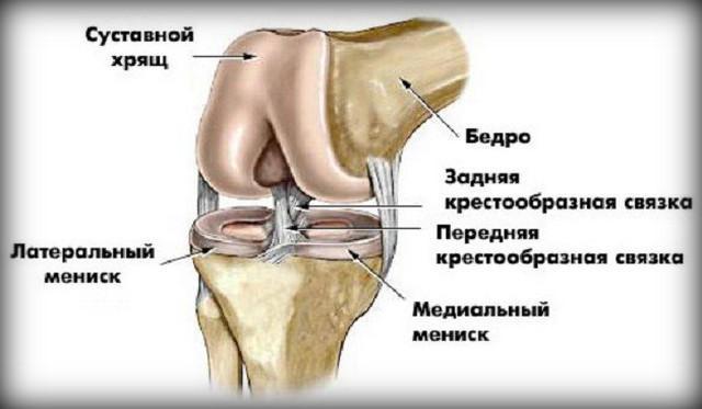 osteoarthritis térdgyakorlatok