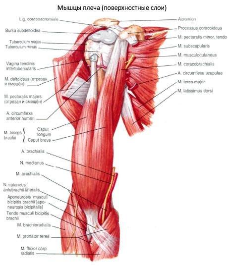 a vállízület deformáló artrózisa 3)