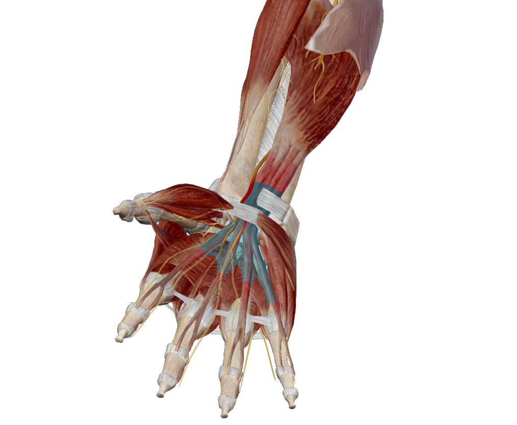 a bal könyökízület fáj, mit kell tenni burgonya artrózis kezelésére