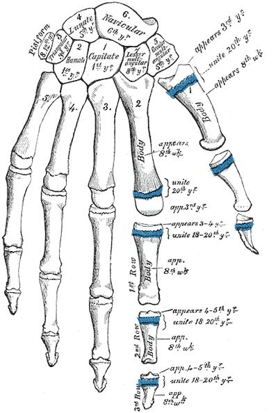 a bal kéz középső ujjának ízületei glükozamin-kondroitin vásároljon az ivanovo-ban