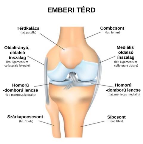 a karok és a lábak ízületei fájnak, mint kezelték)