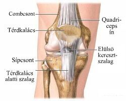 a láb kicsi ízületeinek ízületi tünetei kezelése