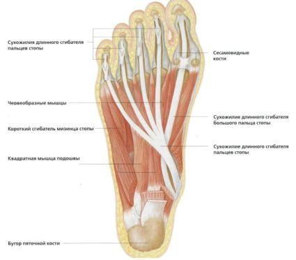 a láb ívének ízületei ízületi gyulladása)