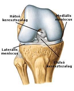 térdízületi kezelés medialis ligamentumának törése ha a második lábujj ízülete fáj