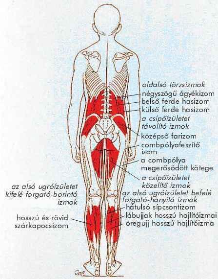 viburnum ízületek kezelése