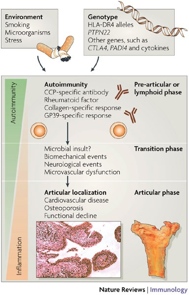 autoimmun rheumatoid arthritis