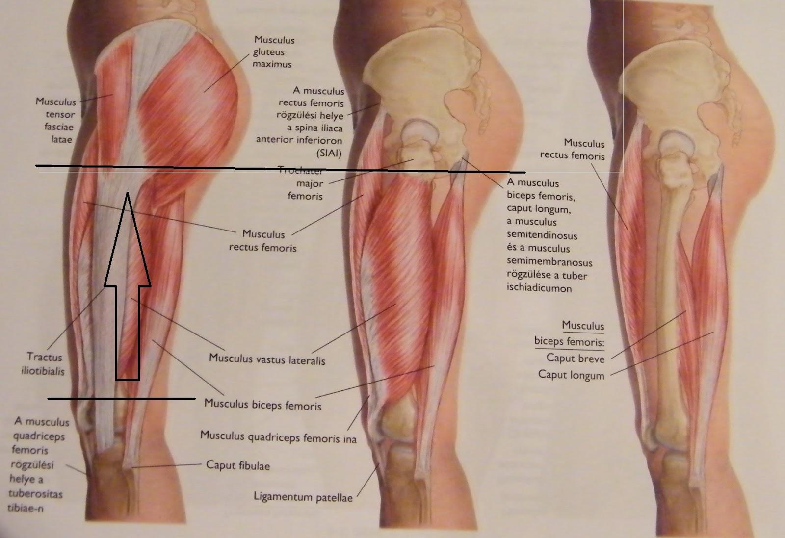 csípő és lágyékfájdalom amint azt az ízületi fájdalom is bizonyítja