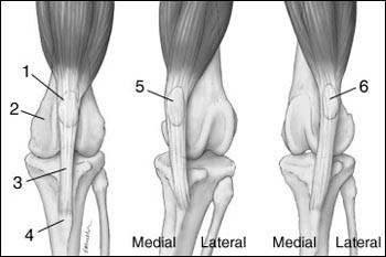 gyógyszer fájdalom a lábujjak ízületeiben tömörítse magnéziával az ízületi fájdalmak kezelésére