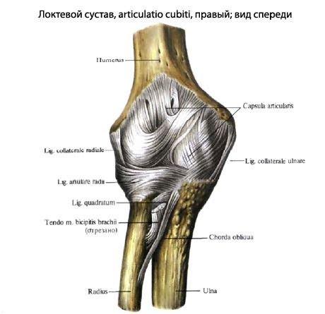 Betekintés: Reumatológia, ortopédia jegyzet