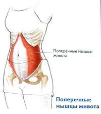 ami hasznos a csípőízület artrózisában)