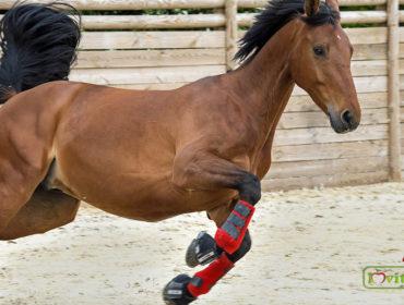 lovas gél ízületekhez
