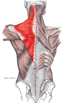 hogyan és hogyan lehet kezelni az 1. fokú artrózist aromaolaj ízületi kezelés