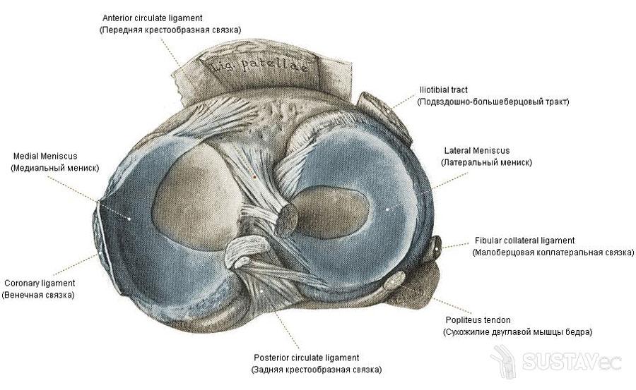 fonáció az ízületek artrózisával)