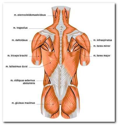 Az izom- és ízületi fájdalom fajtái, okai és kezelése