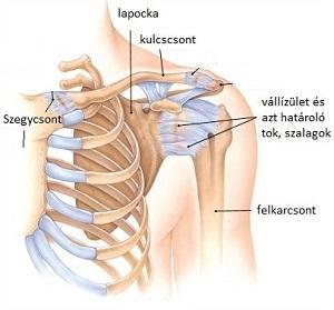 Fájdalom a vállízületben: okai, kezelése