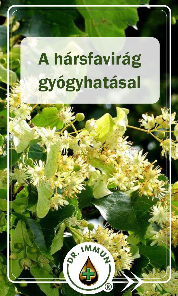 hársvirág ízületi kezelésre)