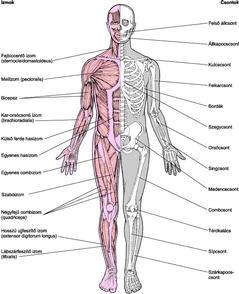 tartós fájdalom az ízületekben és a csontokban