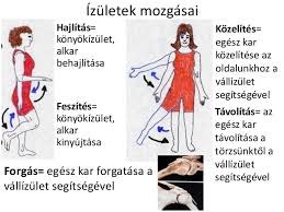 vállak és könyökízületek)
